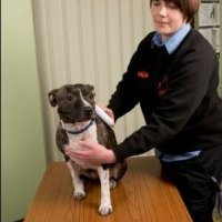 Salix Homes leads the way in compulsory micro-chipping for dogs